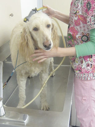 Maizy gets a bath.