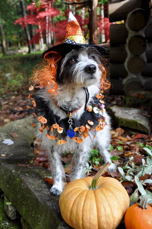 Thank you to all who sent us photos your pet in their Halloween costumes! The staff is currently reviewing the photos and voting for their favorite one. & Halloween Pet Costume Contest 2016