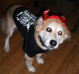 Jeff the devil dog