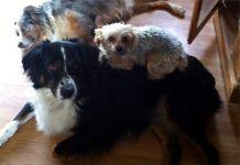 Tessa and Molly